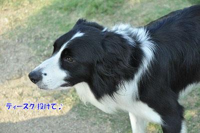 20120816-oya04.jpg