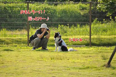 20120816-oya08.jpg