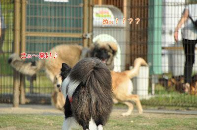 20120816-oya12.jpg