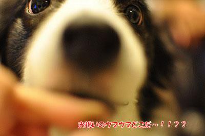 20121111-db04.jpg