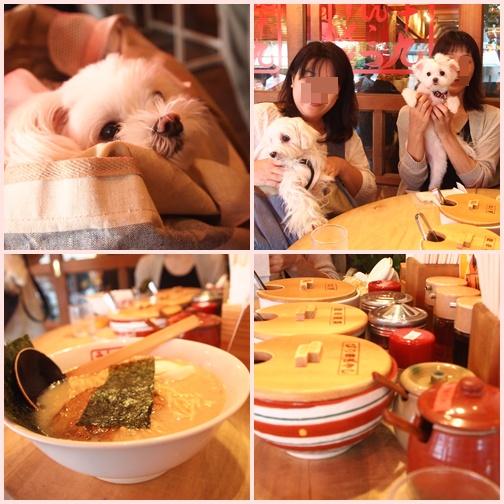 cats3_20120902233911.jpg