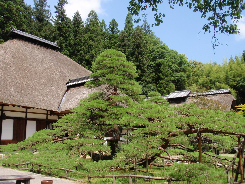 信州常楽寺・松と本堂