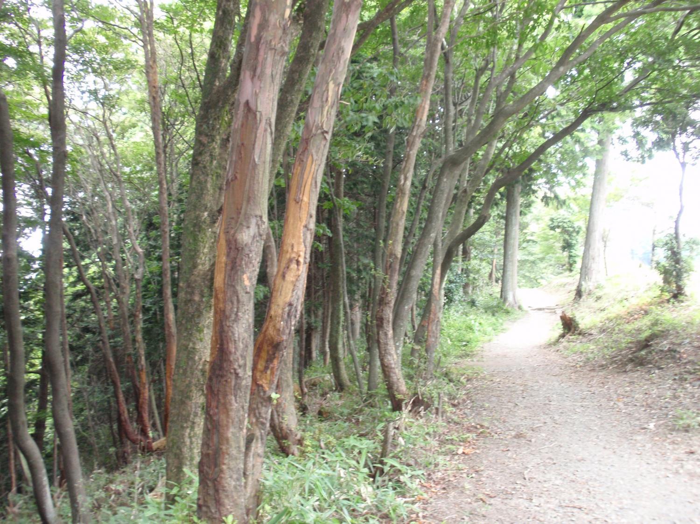 比叡山・横川に続く道