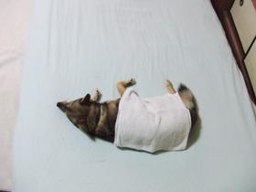犬用タオル