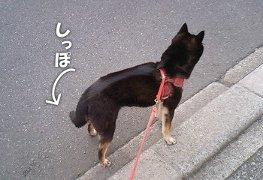 120416_kyouken3.jpg