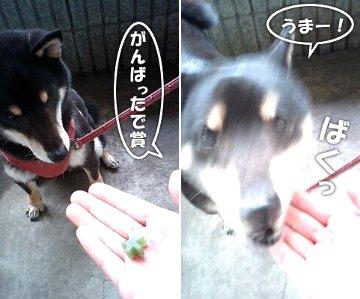 120416_kyouken4.jpg