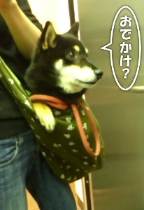 120619_kenshin.jpg