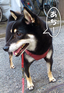 120724_atsui.jpg