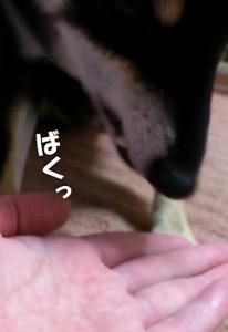 120824_budou2.jpg