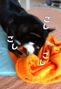 120909_towel.jpg