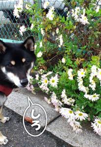 121115_flower.jpg