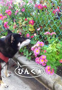 121115_flower2.jpg
