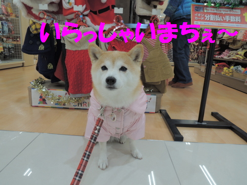 2014120801.png