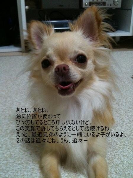 写真 13 (1)