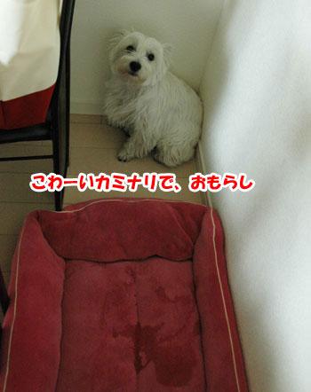 DSC_0066_20131111190333edd.jpg