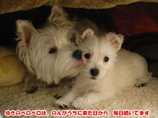 DSC_0117_20131111185652709.jpg