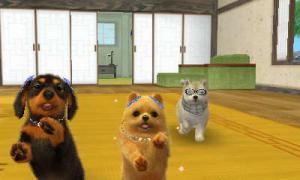 dogs0909.jpg