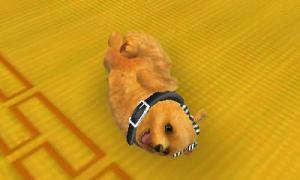 dogs0913.jpg