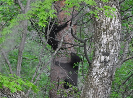 木登り01(2012.5.20)