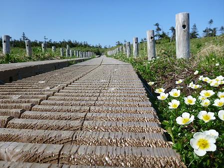 八幡平山頂へ行ってみた45(2012.6.26)