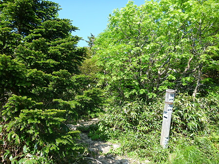 八幡平山頂へ行ってみた47(2012.6.26)