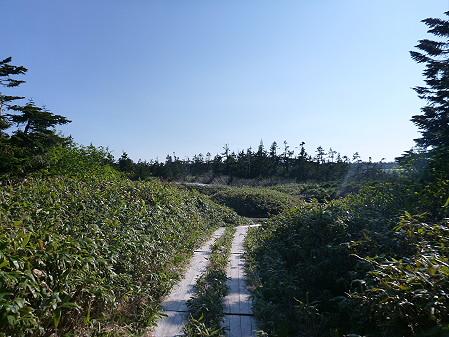 八幡平山頂へ行ってみた55(2012.6.26)