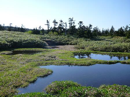 八幡平山頂へ行ってみた59(2012.6.26)
