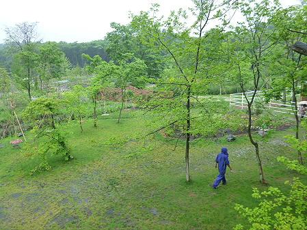 八幡平フラワーランド17(2012.7.16)vol.4