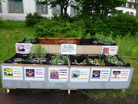 八幡平リゾートゆりガーデン2012 02(2012.7.16)
