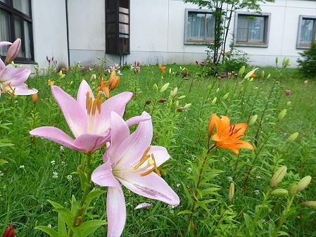 八幡平リゾートゆりガーデン2012 03(2012.7.16)