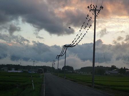 黒い電線01(2012.7.25)