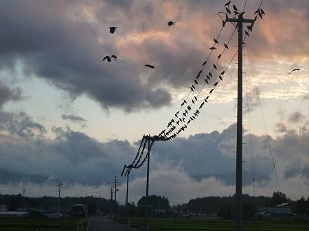 黒い電線02(2012.7.25)