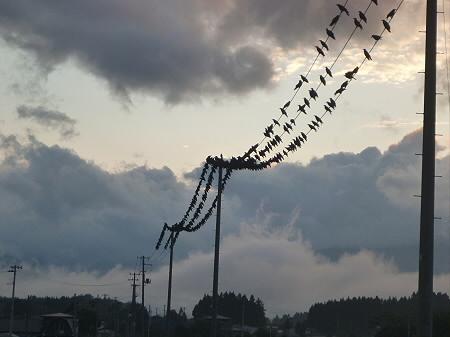 黒い電線03(2012.7.25)