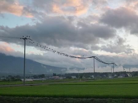 黒い電線04(2012.7.25)