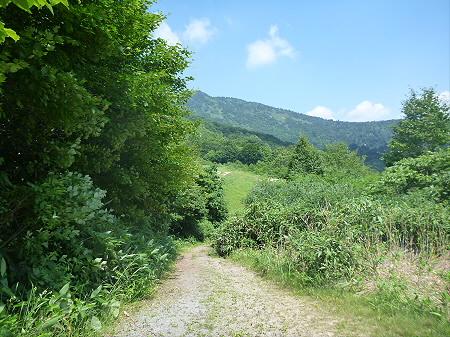 夏の赤沼06(2012.7.31)