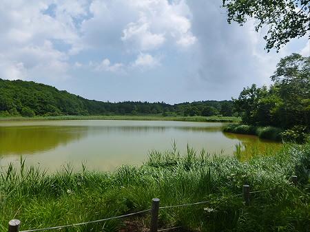 夏の赤沼27(2012.7.31)