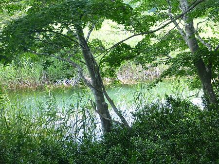 夏の赤沼29(2012.7.31)