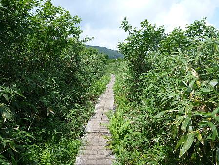 夏の茶臼岳13(2012.7.31)