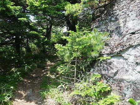 夏の茶臼岳20(2012.7.31)