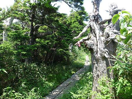 夏の茶臼岳22(2012.7.31)