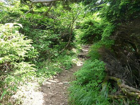夏の茶臼岳37(2012.7.31)