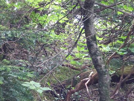 夏の茶臼岳51(2012.7.31)