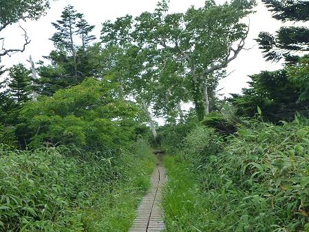 夏の茶臼岳55(2012.7.31)