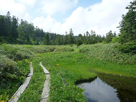 夏の黒谷地湿原14(2012.7.31)