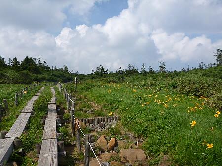 夏の黒谷地湿原21(2012.7.31)