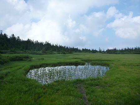 夏の黒谷地湿原25(2012.7.31)