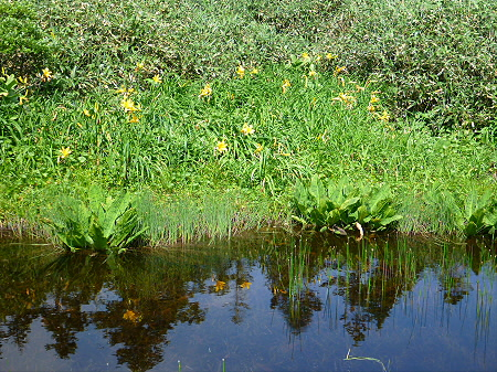 夏の黒谷地湿原31(2012.7.31)