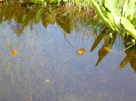 夏の黒谷地湿原32(2012.7.31)