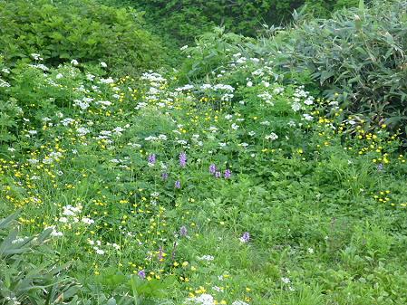八幡平山頂散策04(2012.7.31)
