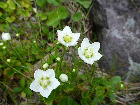 八幡平山頂散策09(2012.7.31)